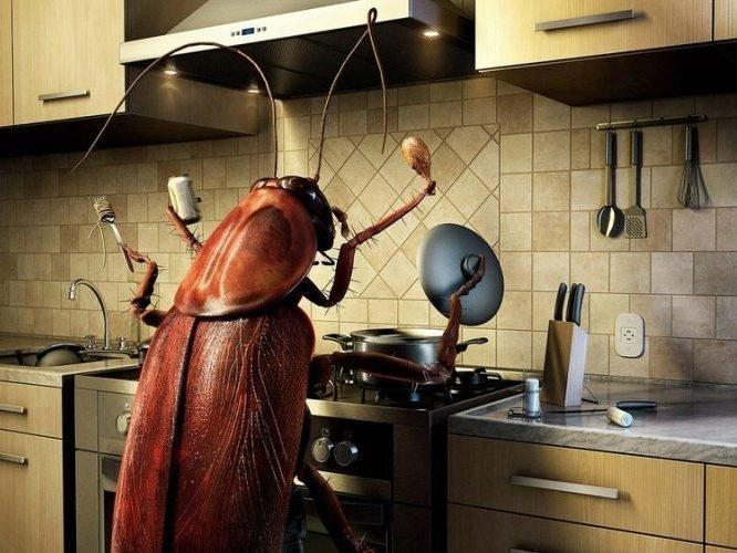 К чему появляются тараканы в квартире примета