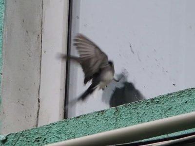 птица стучит в окно примета