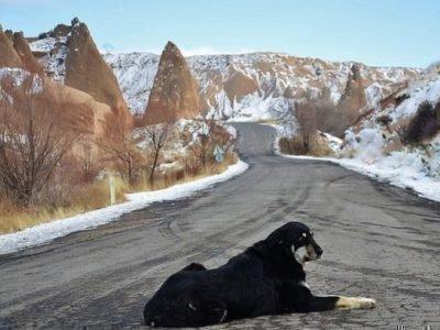 Приметы о собаках на дороге