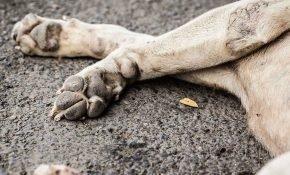 Приметы про сбитую на машине собаку