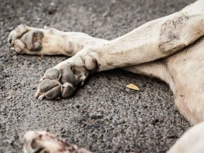 Приметы про сбитую собаку
