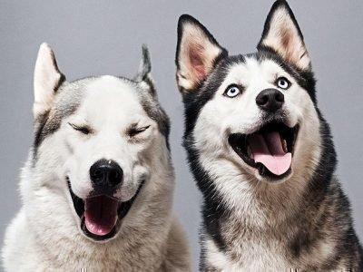 гороскоп совместимости собака и собака
