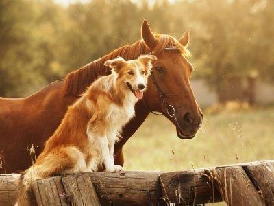 собака и лошадь совместимость