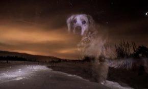 Приметы о смерти собаки