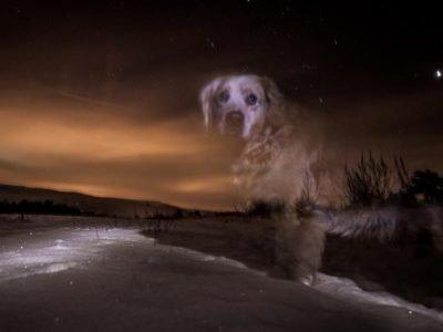 умерла собака приметы