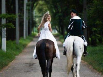 Лошадь и Лошадь - дружба
