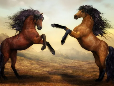 Лошадь и Лошадь совместимость