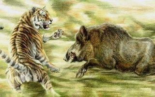 Совместимость Кабана и Тигра