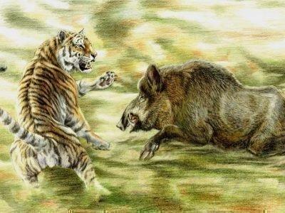 Тигр и Кабан совместимость