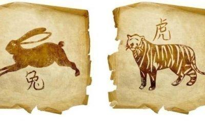кролик и тигр