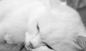 Приметы про смерть кошки