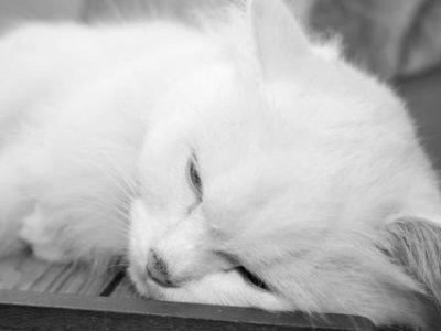 Кошка умирает дома - приметы