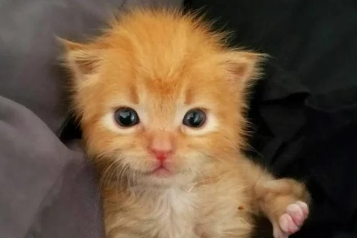 Рыжий котенок-призрак