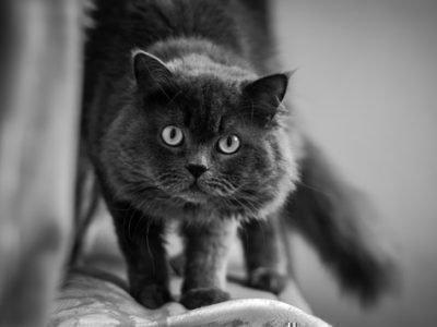 Кошки видят духов