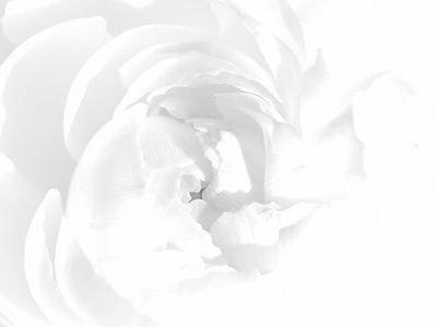 Белый цвет души