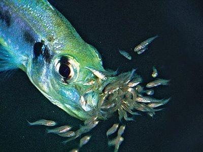Рыба с мальками во сне - приметы
