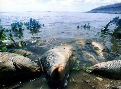 Сон про мертвую рыбу