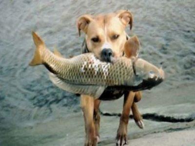 Сон собака поймала рыбу - что означает
