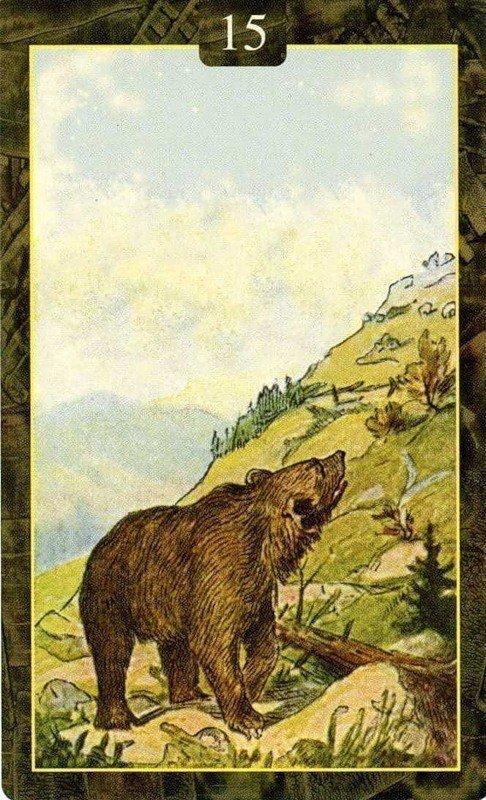 Карты Ленорман. Медведь