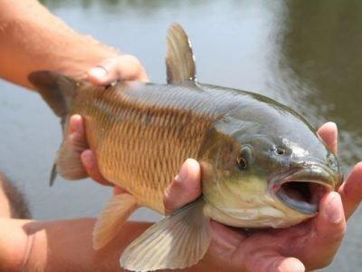 Что означает сон про рыбу