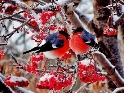 Приметы с птицами на Новый год 2020