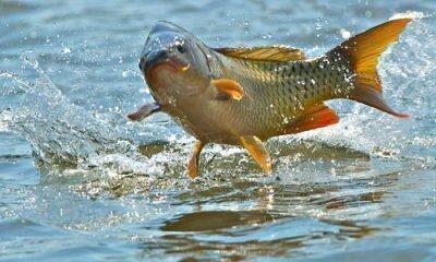 Рыби во сне - приметы