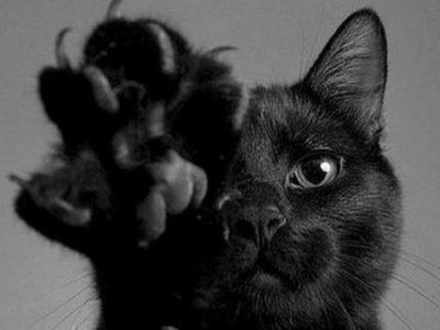 Черная кошка царапает во сне