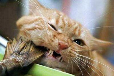 Во сне кошка ест рыбу - толквоание