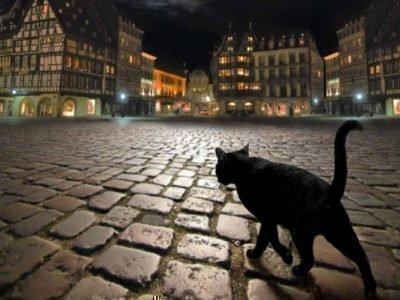 Сонник - черная кошка ночью
