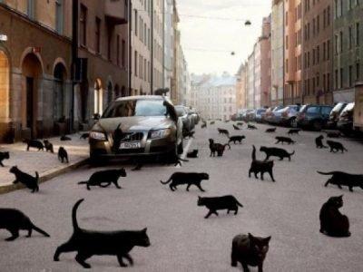 Много черных кошек во сне