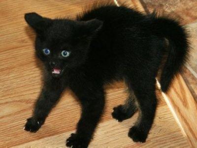 Черный котенок снится - что это значит
