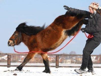 Агрессивная лошадь во сне - толкование