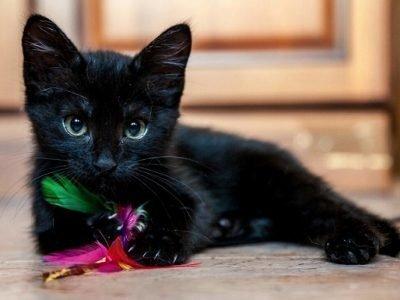 Сон про черного котенка - значение