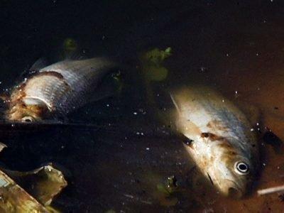 Сон про мертвую рыбу в мутной воде - что значит
