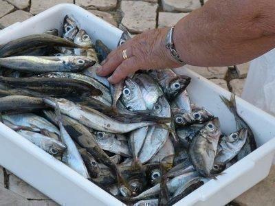 К чему снится много сырой рыбы
