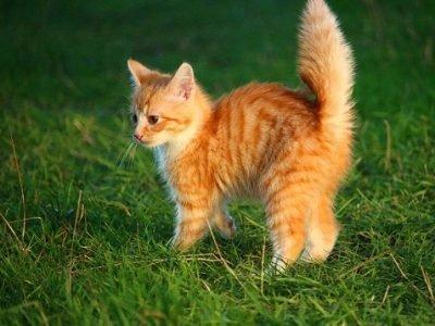 К чему снятся рыживе котята