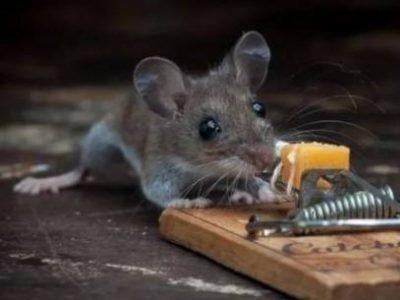 Сон: мышь в мышеовке что значит