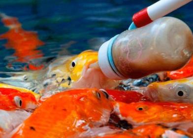 Кормить рыбу в озере
