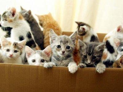 Много разных котят во сне - значение