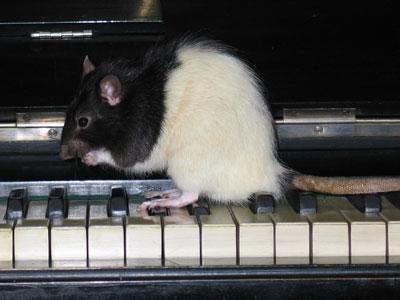Снится крыса в ломе