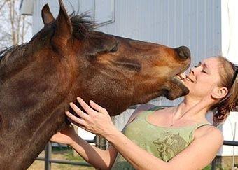 Лошадь со сне кусает - значение