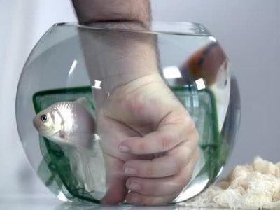 Поймать рыбу в аквариуме