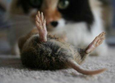 Сон про мертвую мышку