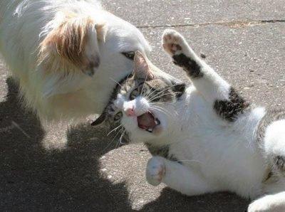 Толкование сна - собка кусает кота