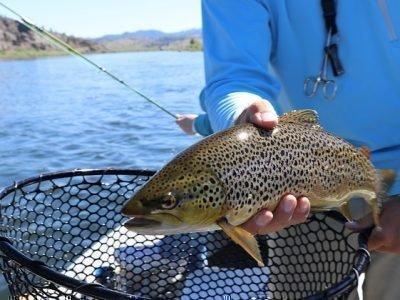 Сон поймать рыбу и отпустить