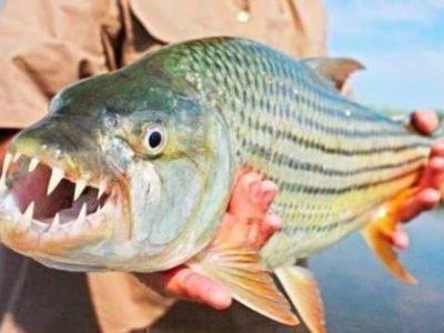 Страшная рыба во сне
