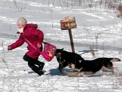Сонник - нападение стаи собак