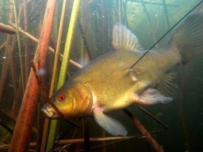 Убить рыбу под водой