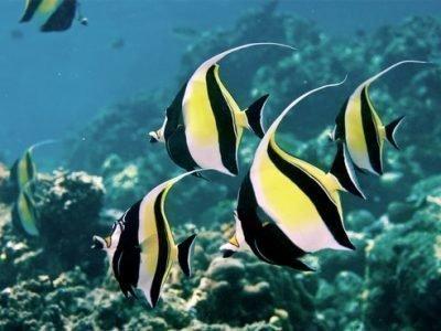 Красивая рыба во сне - сонник