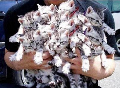 Много котят во сне по сонникам